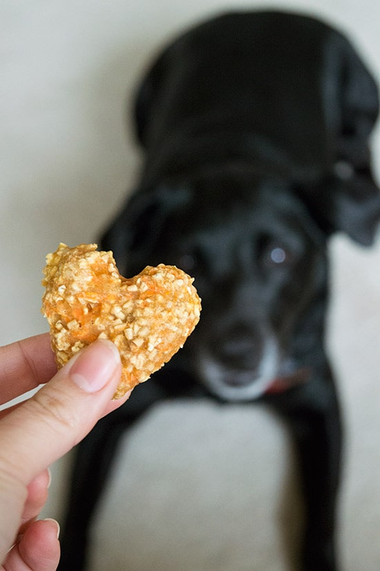 Recipe For Dog Treats Made With Applesauce