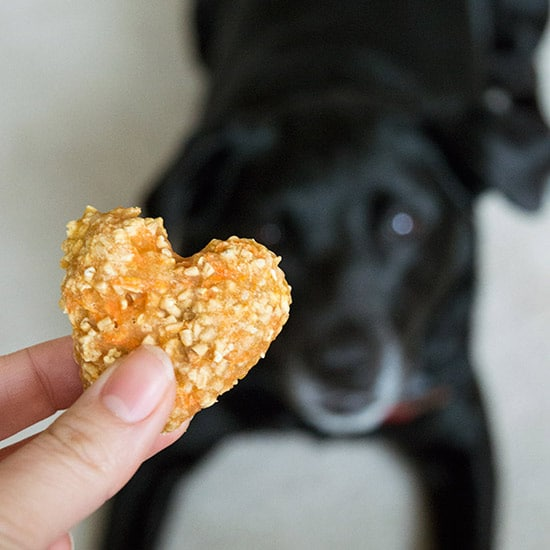 carrot-oat-applesauce-treats-for-dogs-and-horses-square