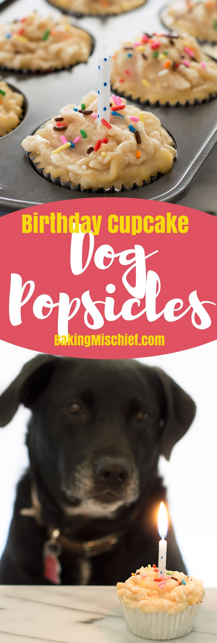 Cupcake-shaped dog popsicles made with chicken broth and a pureed tuna frosting. Simple to make and your dog is going to LOVE them! From BakingMischief.com