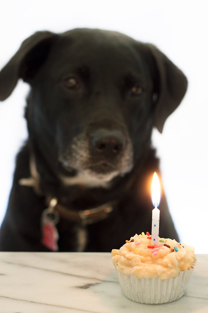 A black lab looking at a dog cupcake popsicle with a candle in it.